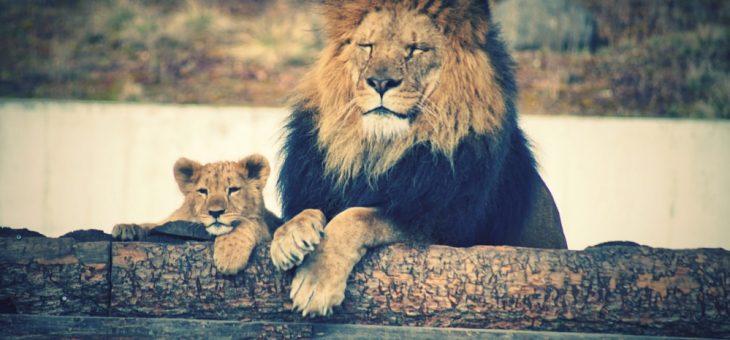 """""""La cobardía no viene de Dios, sino que lo que viene de Dios es poder, amor y dominio propio""""."""